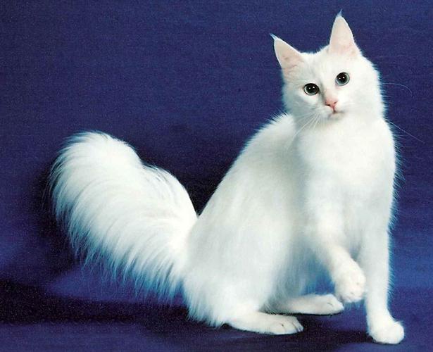 gambar 11 - sifat sifat kucing peliharaan